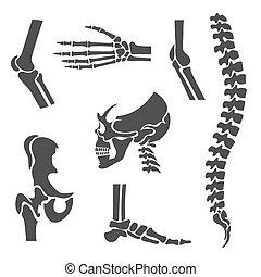 vektor, rygg, skarvar, set., symboler, ortopedisk, mänsklig
