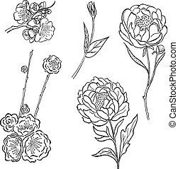 pfingstrose zeichnen blumen zeichnung, blume, pfingstrose, blumengebinde, rose, hand, vektor, blumenvase, Design ideen