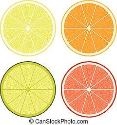 vektor, scheiben, zitrone, limette, pampelmuse, orange