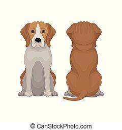 vektor, sitzen, langer, animal., ansicht, klein, zurück, beagle, ohren, front, junger hund, wohnung, muzzle., abbildung, inländisch, bezaubernd, dog.