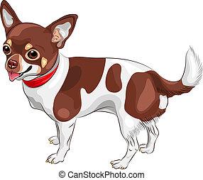 vektor, skizze, hund, chihuahua, rasse, lächeln