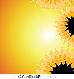 vektor, solsken, solrosor