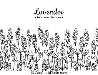 vektor, stil, teckning, border., isolerat, lavendel, leaves...