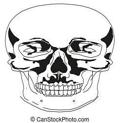 vektor, svart, vit, mänsklig, illustration, kranium
