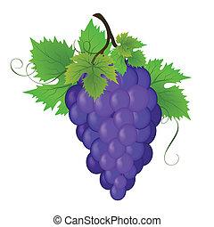 vektor, szőlő, csokor