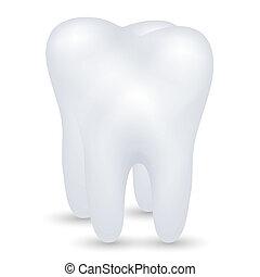 vektor, tand