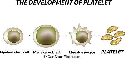 vektor, thrombocytosis., thrombopoiesis., isolerat, ...