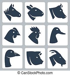vektor, tiere, schafe, kuh, domestiziert, heiligenbilder, schwein, ente, huhn, gans, hahn, ziege, set:, pferd