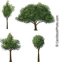 vektor, træer, sæt