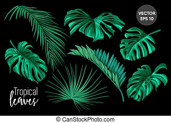 vektor, tropische , blätter, monstera, handfläche, satz