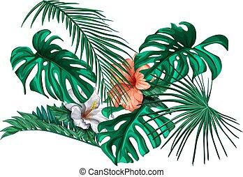 vektor, tropisches blatt, monstera, handfläche, hibiskus, satz