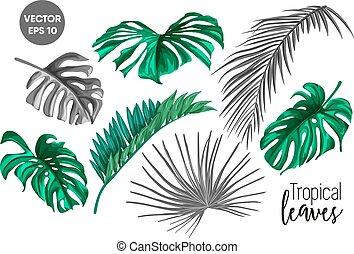 vektor, tropisches blatt, monstera, handfläche, monochrom, satz