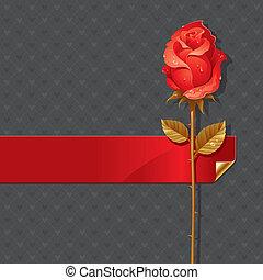 vektor, valentines, ábra, noha, piros rózsa, és, szalag