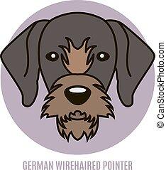vektor, wirehaired, portræt, tysk, firmanavnet, pointer., lejlighed, illustration
