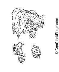 vektor, zeichnung, illustration., skizzen, weißes, bier, grobdarstellung, pflanze, hintergrund, freigestellt, hopfen
