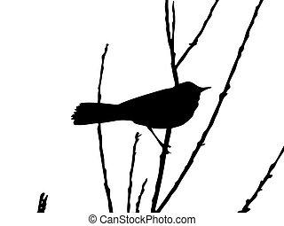 vektor, zeichnung, zweig, vogel
