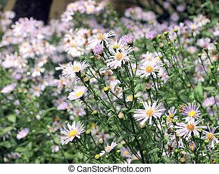 veldbloemen, achtergrond
