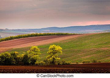 velden, achtergrond, bomen