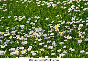velden, bloem