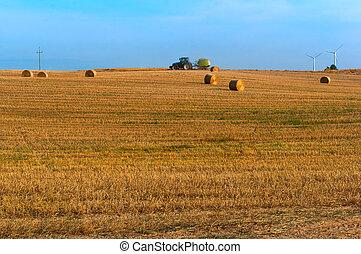 velden, bundels, verdraaid, hooi, haystacks, akker, hooi