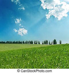 velden, hemel, groene, bewolkt, onder
