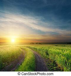 velden, op, groene, vieze , ondergaande zon , straat