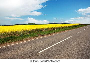 velden, straat, canola, landelijk