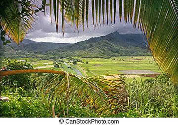 velden, taro, kauai
