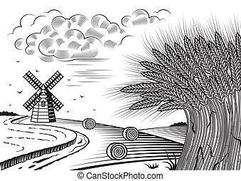velden, tarwe, landscape