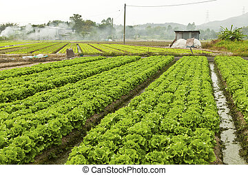 velen, groentes, bouwland