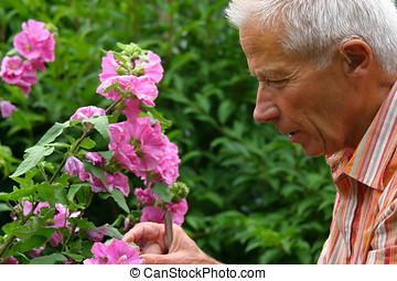 velho, jardinagem, homem