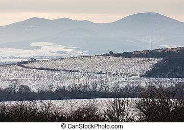 velka, invierno, tokaj, trna, región, viñas, eslovaquia,...