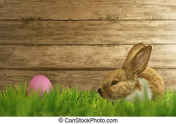 velloso, foxy, conejo, en, pasto o césped, con, huevos de pascua