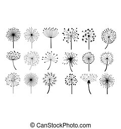 velloso, semillas, conjunto, flores, diente de león