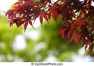 velmi, list, slabý ohnisko, podzim, bokeh, mladický grafické pozadí
