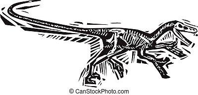 velociraptor, courant, fossile