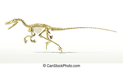 Velociraptor dinosaur, full skeleton scientifically correct, side view, with drop shadow on white background. Clipping path included.