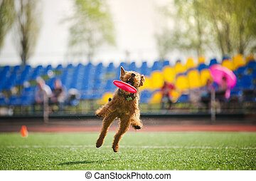 velshterer dog catching the flying disc