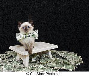 vem, någonsin, said, pengar, can't, köpa, lycka, köpt, a,...