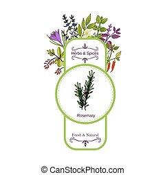 vendange, étiquette, herbes, collection., épices, romarin