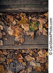 vendange, automne, couvert, feuillage, flétri, étapes, bois
