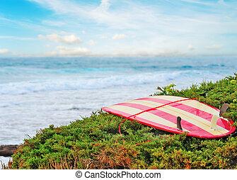vendange, buisson, vert, planche surf
