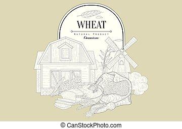 vendange, croquis, blé