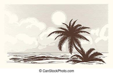 vendange, croquis, palmier