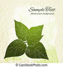 vendange, feuilles, main, vecteur, fond, dessiné