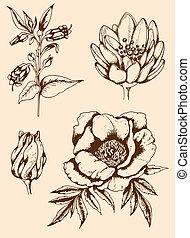 vendange, fleurs, main, dessiné