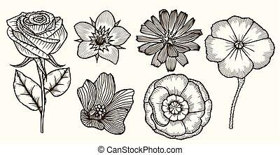 vendange, flowers., ensemble