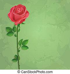 vendange, fond, rose
