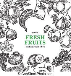 vendange, illustration, main, arrière-plan., vecteur, fruits, dessiné