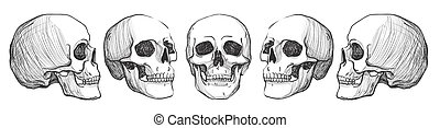 vendange, illustration, skulls., vecteur